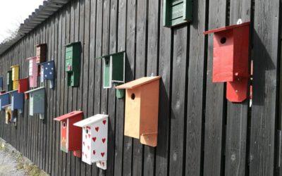 Warsztaty budowy budek dla ptaków